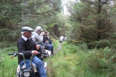 2016 Beddgelert Forest