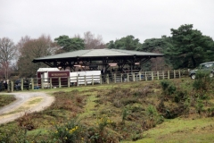 2018 Deerleap to Beaulieu Rd Pony Sales Regional Ramble