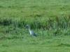 Egrets Way 1